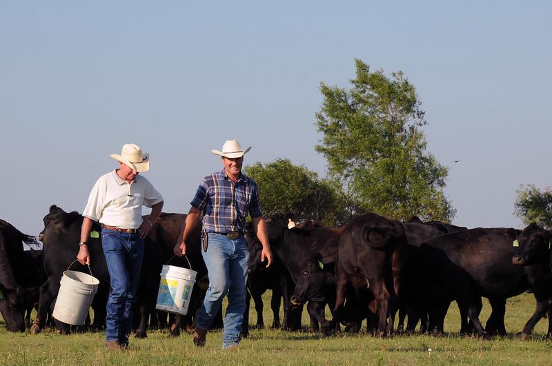 Des ranchers américains et leur troupeau de vaches