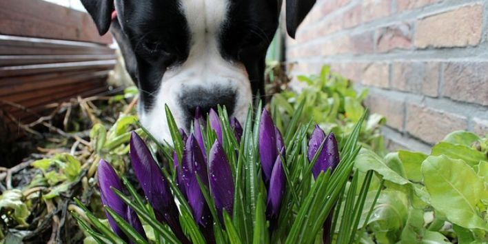 dos smell flower grass