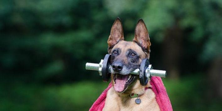 dog weight workout