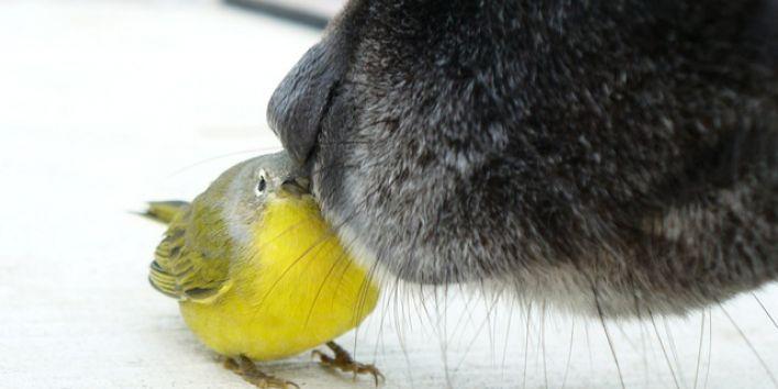 dog meets bird