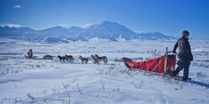 dog-sledge snow